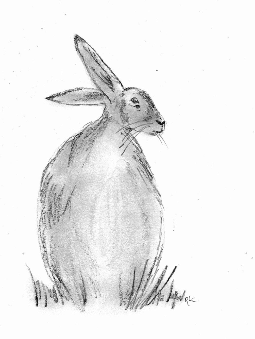 Hare (30 mins)