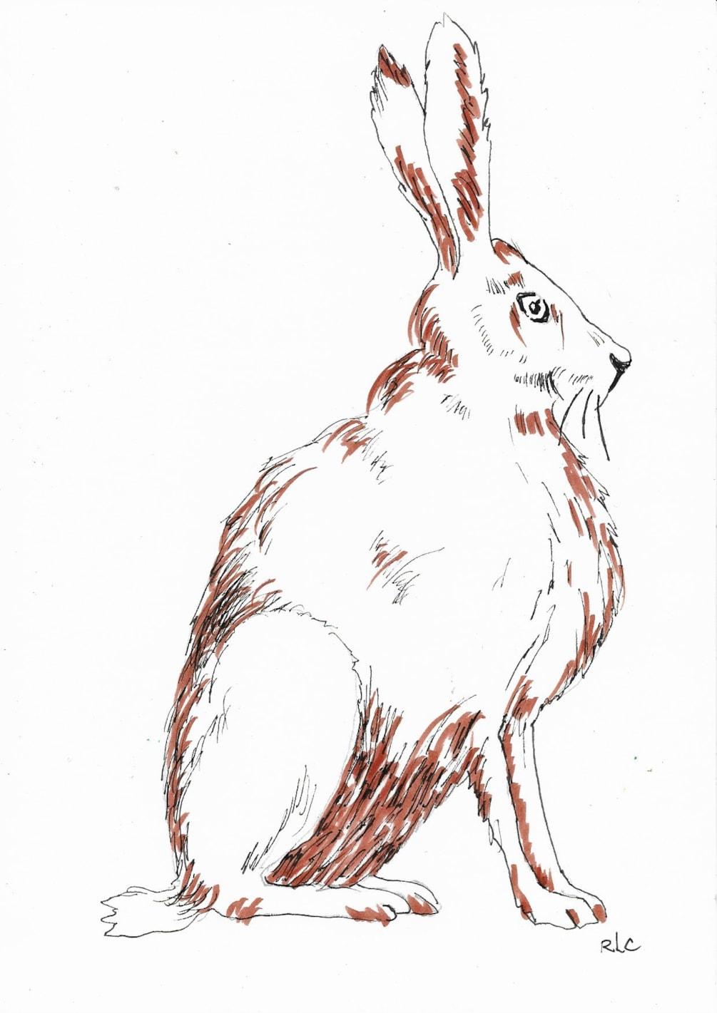 Hare (Brush Pen)