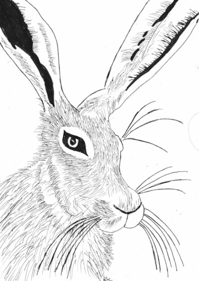 Hare Named Keswick
