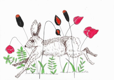 Hare & Wildflowers