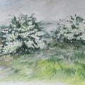 Hawthorns in wind
