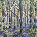 Hitchwood, Bluebells 2