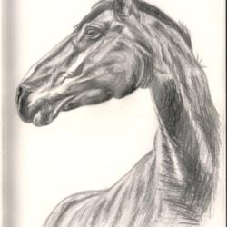 Horse 2020-10-23