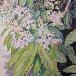 Horse Chestnut Flowers - Watercolour - April 8th 2021