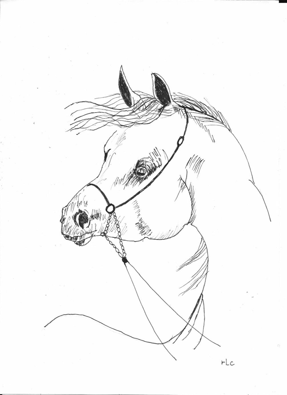 Horse Head (1)