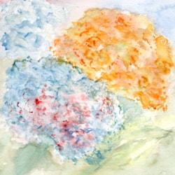 Hydrangeas - Summer and Winter