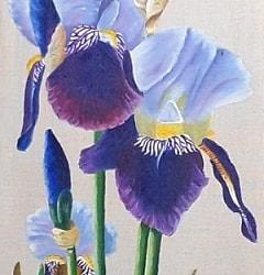 Iris tall_edited