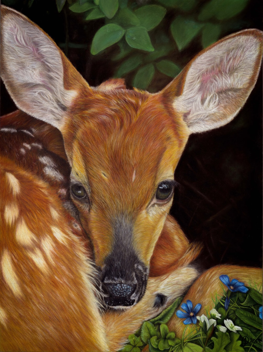 Janine_Lees - AMBER (Fawn) PO