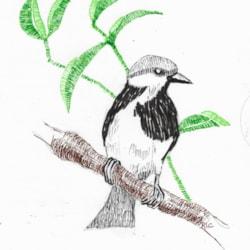 January Bird