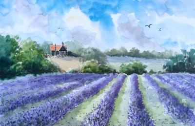 Lavender Field, North Essex.