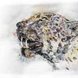 Leopard '20-2