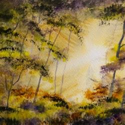 Light in the Trees 72dpi