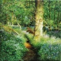 Light in the woods.20cms sqjpeg