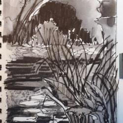 Lily Pond - Copy