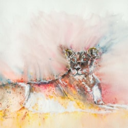 Lioness '21-1