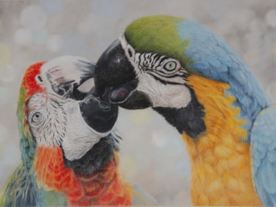 Macaws, edied for Painters Online