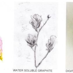 Magnotia Three Ways
