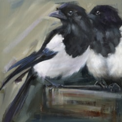 Magpie Watch (2)