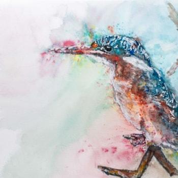 Malachite Kingfisher  '21-1