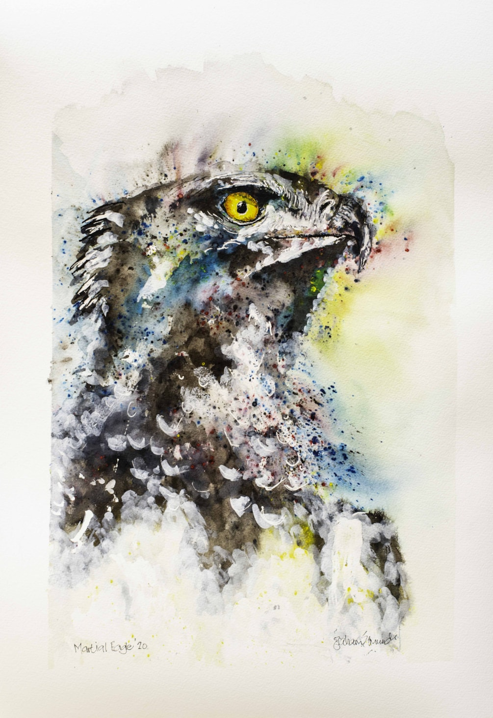 Martial Eagle '20 signed (1 of 1)