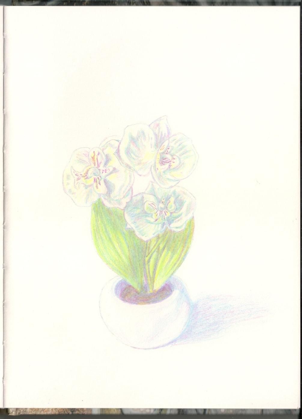 Mini Orchid 2020-08-02