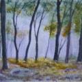 Morning Woods 72dpi