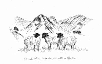 Newlands Valley Sheep