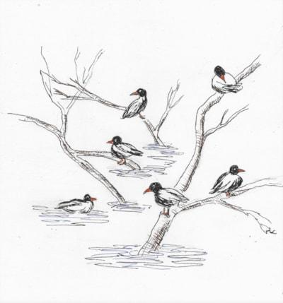 Nidderdale Ducks