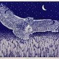 Night hunter (midnight blue) by Margaret Mallows