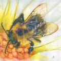 One Bee001