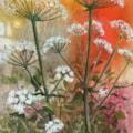 Orange hogweed