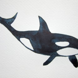 Orca MD 020521