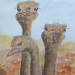 Ostriches (watercolour)