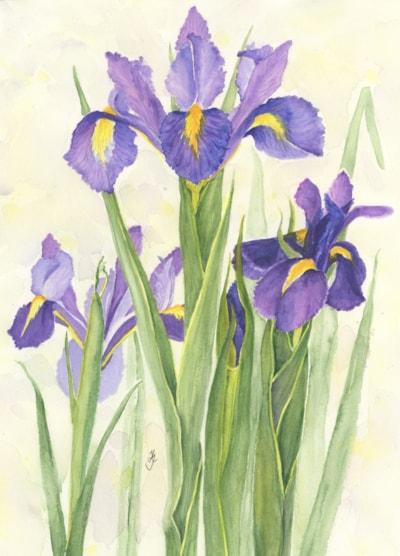 P Irises