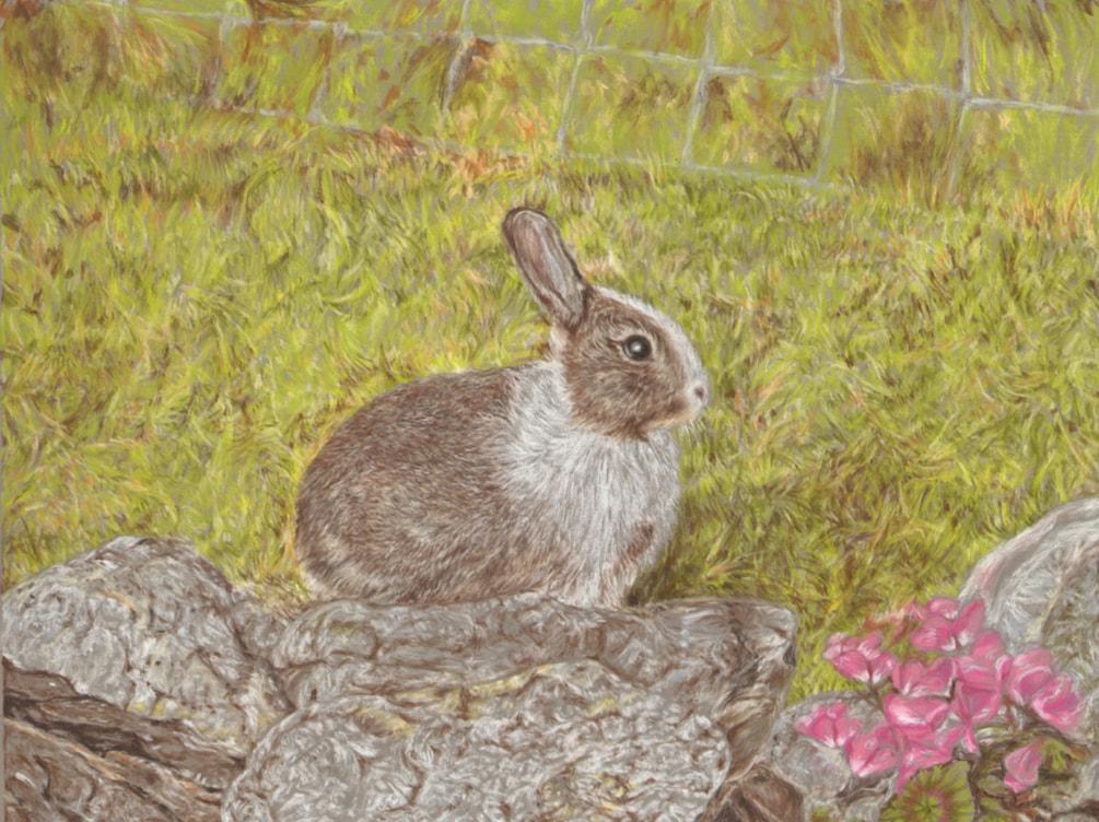 Patch (Rabbit)