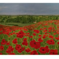 Pegsdon Hill Poppies
