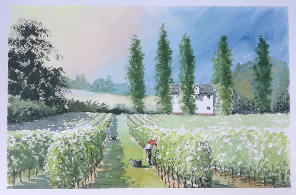 Picking Bacchus, Galleywood Vineyard