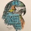 Polly (2)