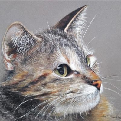 PortraitOfACat (1)
