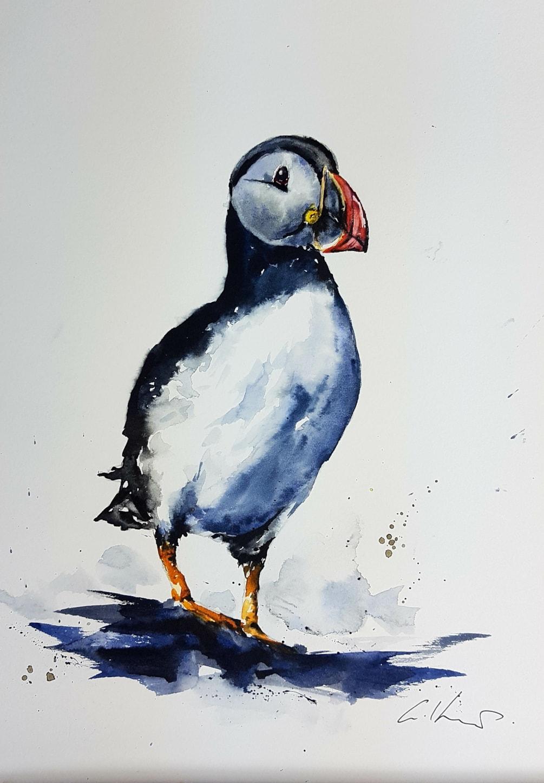 Puffin, watercolour by Graham Kemp