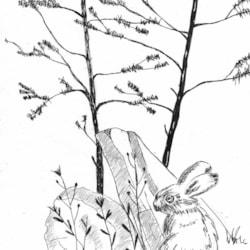 Rabbit,Rocks and Pines
