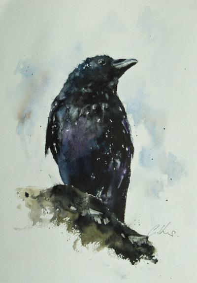 Raven. Watercolour by Graham Kemp..JPG