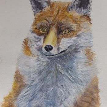 Red Fox 72dpi