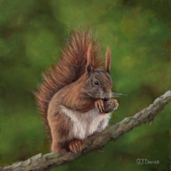 Red Squirrel 1 Small