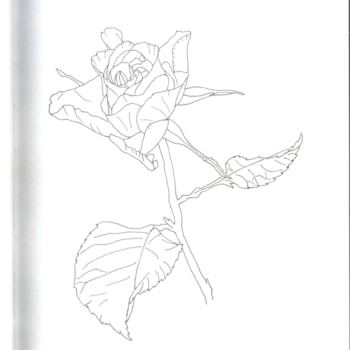 Rose 2020-09