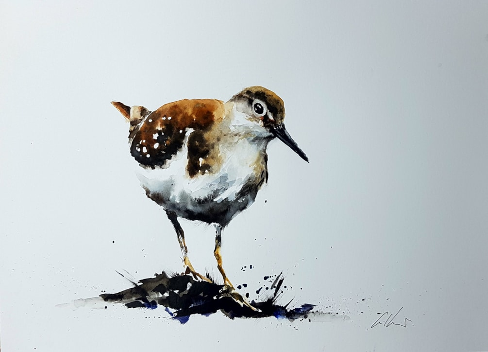 Sandpiper, watercolour by Graham Kemp