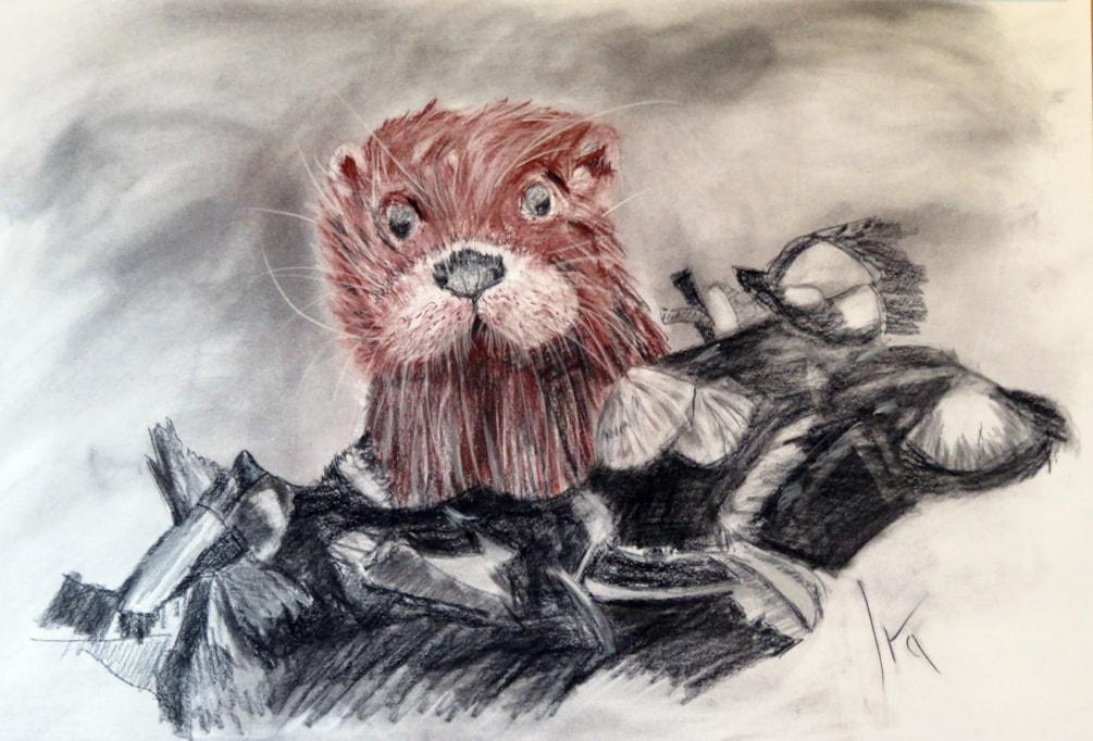 Sanguine otter