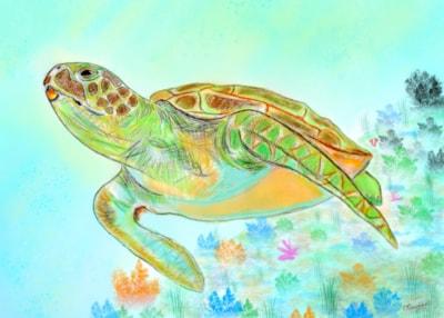Sea Turtle 001