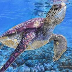 Sheldon - Sea Turtle Web Image CR