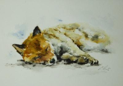 Sleeping Fox, watercolour by Graham Kemp.